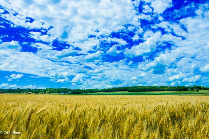 <p> Những cánh đồng lúa mì trải dài đến tận chân trời ở Kansas trong ống kính của Hằng. Chuyến đi được cô thực hiện từ tháng 4 đến 10/2013.</p>