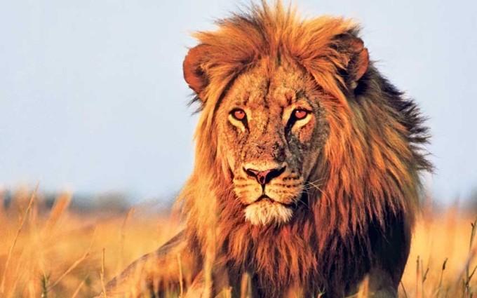 """<p class=""""Normal""""> <strong>Botswana</strong></p> <p class=""""Normal""""> Bạn mất trung bình 21 USD cho điểm du lịch hoang dã số một châu Phi này. Nét hấp dẫn của thiên nhiên hoang sơ và văn hóa bản địa đặc sắc đã giúp Botswana thu hút được 2,1 triệu lượt khách năm 2013.</p>"""