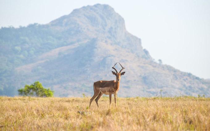 """<p class=""""Normal""""> <strong>Swaziland</strong></p> <p class=""""Normal""""> Với 31 USD (không bao gồm giá vé máy bay), du khách được thưởng thức thiên nhiên hoang dã, những hoạt động mạo hiểm như leo núi, chèo thuyền. Văn hóa truyền thống cũng là điểm thu hút du khách bởi Swaziland là một trong những nước cuối cùng trên thế giới còn duy trì nền quân chủ chuyên chế. Vương quốc nhỏ bé này thu hút được một triệu lượt khách quốc tế năm 2013.</p>"""