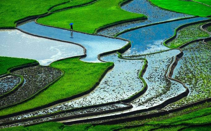 <p> Trang <em>Telegraph </em>miêu tả ruộng bậc thang ở Việt Nam là một trong những cảnh quan có màu xanh nổi bật nhất thế giới. Tờ báo Anh cũng nhắc đến đây là nước xuất khẩu gạo lớn thứ hai trên thế giới.</p>