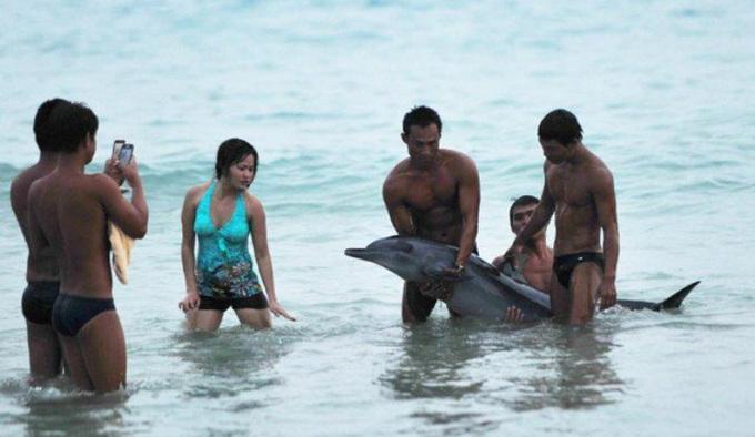 <p> <em>Ebaumsworld</em> đã gọi du khách trong bức ảnh trên là những kẻ ngốc. Nhiều người cũng lên án vì hình ảnh chụp cùng cá heo.</p>