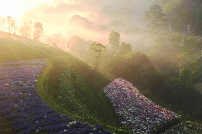 <p> Cánh đồng hoa này vừa xuất hiện cách đây không lâu nhưng gây sốt bởi những thửa hoa nhiều màu sắc đẹp mắt. Cánh đồng rộng khoảng 2 ha, nép mình bên cánh rừng thông ngút ngàn trên đường lánh nạn 1, đèo Mimosa; cách trung tâm Đà Lạt chừng 10 km.</p>