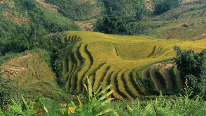 <p> <strong>Sa Pa</strong></p> <p> Thuộc Lào Cai, Sa Pa là điểm đến hấp dẫn của du khách ưa mạo hiểm, thích tận hưởng không khí trong lành, các thác nước, ruộng bậc thang, văn hóa bản địa, và vô số tuyến đi bộ đường dài. Tới Sa Pa du khách còn được chinh phục đỉnh Fansipan cao 3.143 m. Thời gian thích hợp nhất để tới đây là tháng 4, 5 ngay trước mùa hè có mưa nhiều. Ảnh: <em>Hoang Dinh Nam.</em></p>