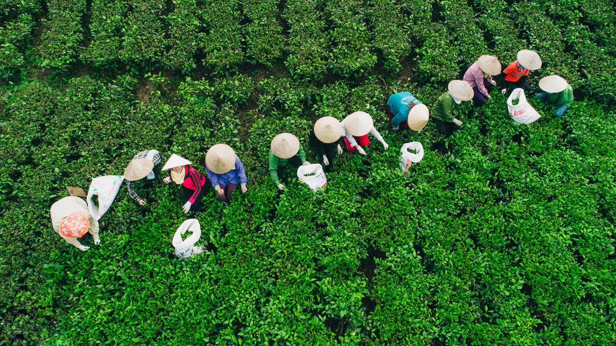 Nice destinations in the region of 'first place tea' Thai Nguyen