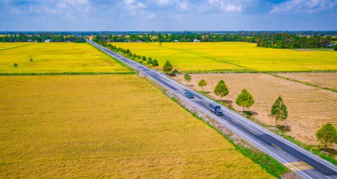 Ripe rice fields, pineapple tourists to Hau Giang, Viet Nam