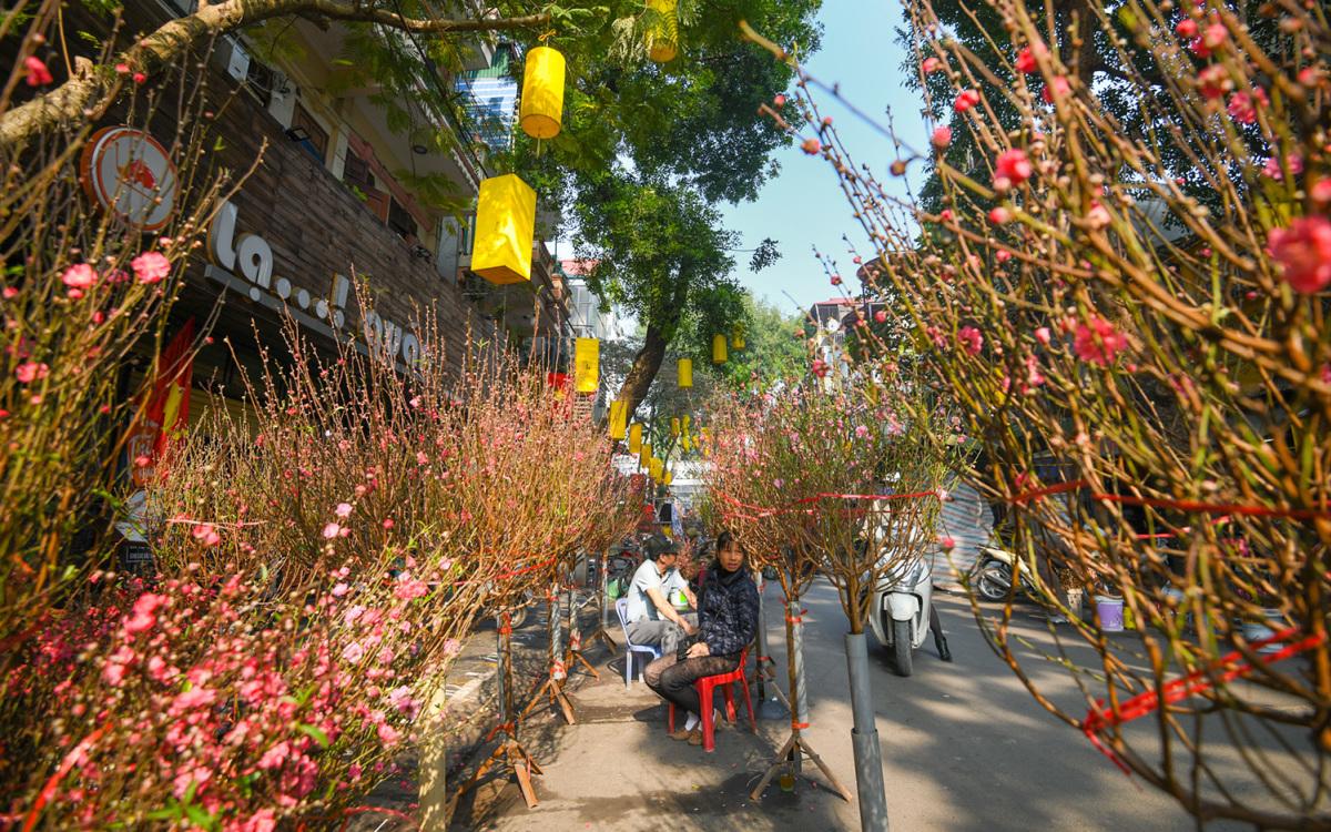 5 chợ hoa ngày Tết nổi tiếng ở Hà Nội