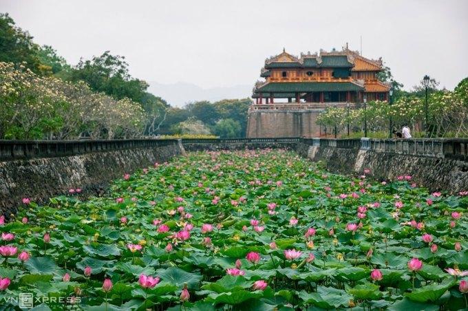 Sen đầu mùa ở Đại Nội Huế. Ảnh: Nguyễn Phong.