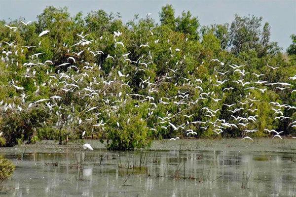 Hàng trăm loài chim cò quýhiếm khắp nơi đã về Trà Sư làm tổ và sinh sôi nảy nở.Ảnh: Trọng Hiếu.