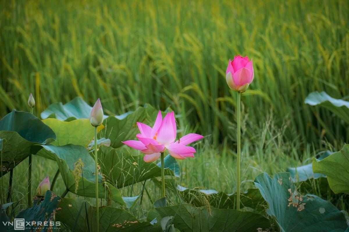 Lang-que-Quang-Nam-10-1588304474.jpg?w=1200&h=0&q=100&dpr=1&fit=crop&s=7VO2fGXdJx0kd4dN_TOwnA