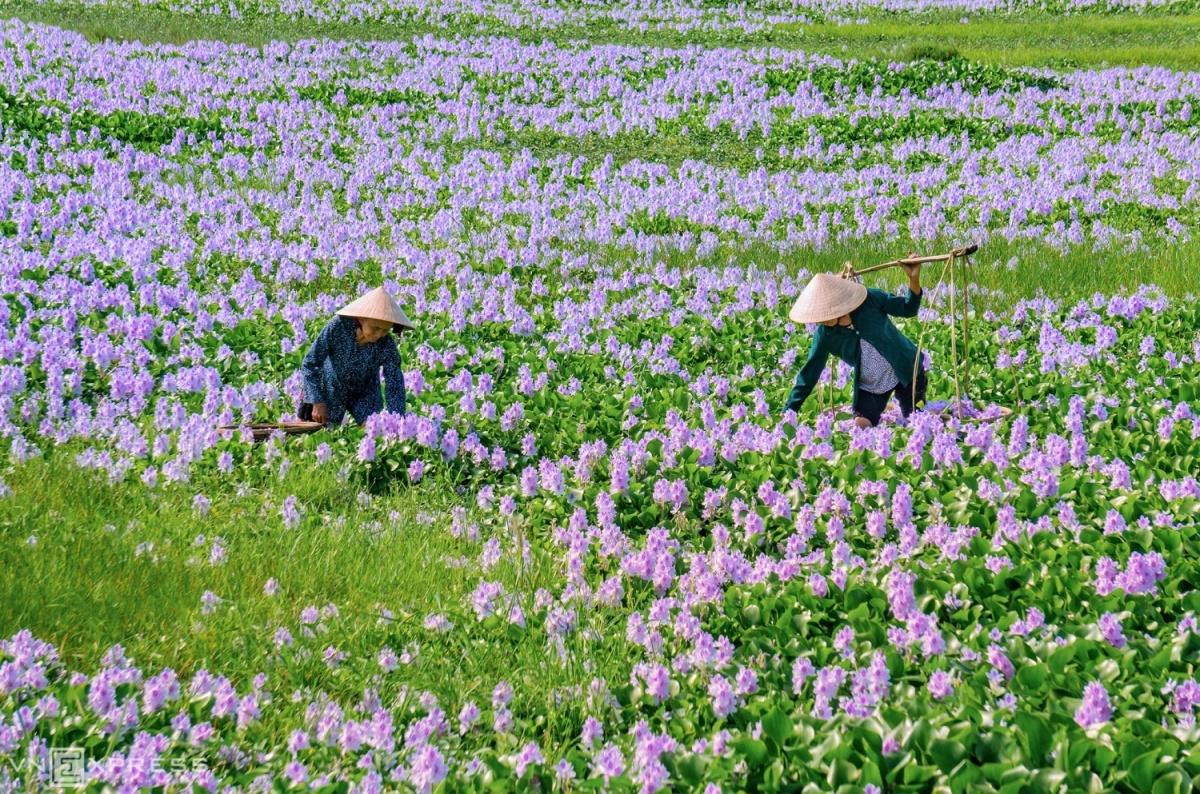 Lang-que-Quang-Nam-4-1588304470.jpg?w=1200&h=0&q=100&dpr=1&fit=crop&s=VdxyW-oEQ7WJFa32rI0eIg