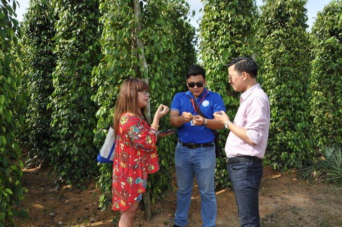 Du khách tham quan và được nghe giới thiệu về hồ tiêu của Phú Quốc. Ảnh: Nguyễn Nam.