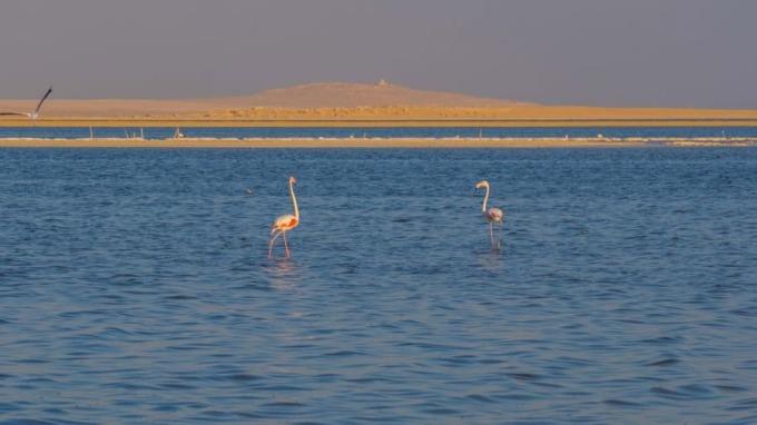 Thật khó để tưởng tượng rằng một ốc đảo với hồ, thác nước nhỏ ngoài sa mạc cùng Thung lũng Cá voi lại hiếm khi được xuất hiện trong danh sách những điểm đến hút khách du lịch hàng đầu. Nhưng ở một nơi như Ai Cập, với những kim tự tháp cổ xưa và các bãi biển tuyệt đẹp, sự cạnh tranh này là điều rất dễ hiểu. Ảnh: CNN.
