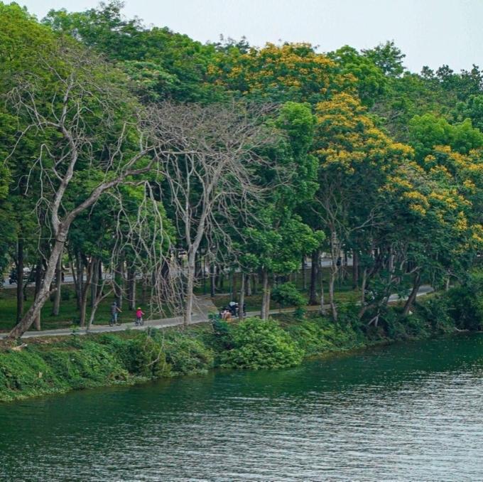 Từ cầu Phú Xuân, bạn có thể bắt trọn nhiều góc ảnh đẹp, từ những tán lá xanh, cả gia đình đạp xe, tình nhân dừng xe tâm sự...