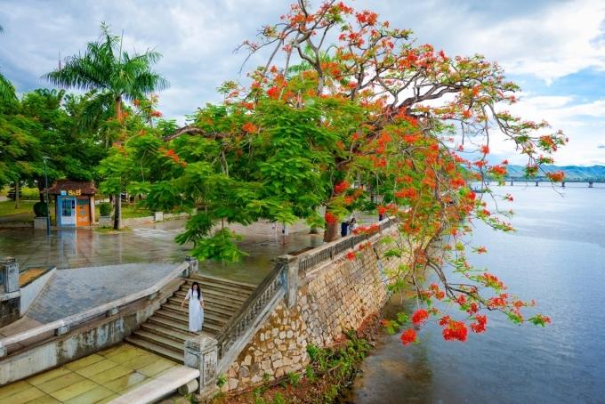 Trên Instagram, Facebook, nhiều du khách nói ấn tượng với những tán phượng đỏ đổ bóng xuống sông Hương