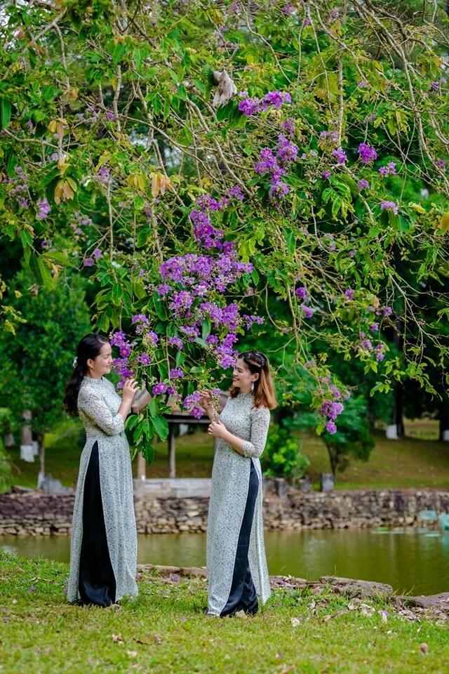 Từ tháng 4 đến tháng 6, nhiều tuyến phố Huế nổi bật với sắc tím bằng lăng. Mỗi bông hoa có 6 cánh, mọc thành từng chùm dài từ 20 đến 40 cm.