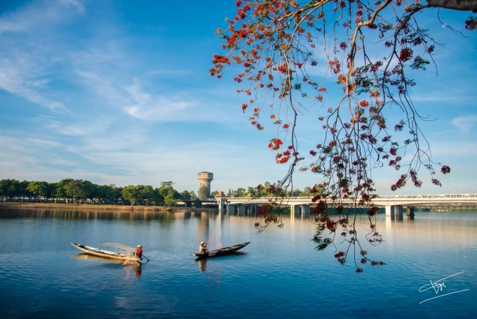 Năm nay, những gốc phượngở đầu cầu Dã Viên phía bờ Bắc sông Hương nở sớm hơn những nơi khác, trở thành điểm đến lý tưởng của những người yêu thích thiên nhiên, cảnh sắc. .
