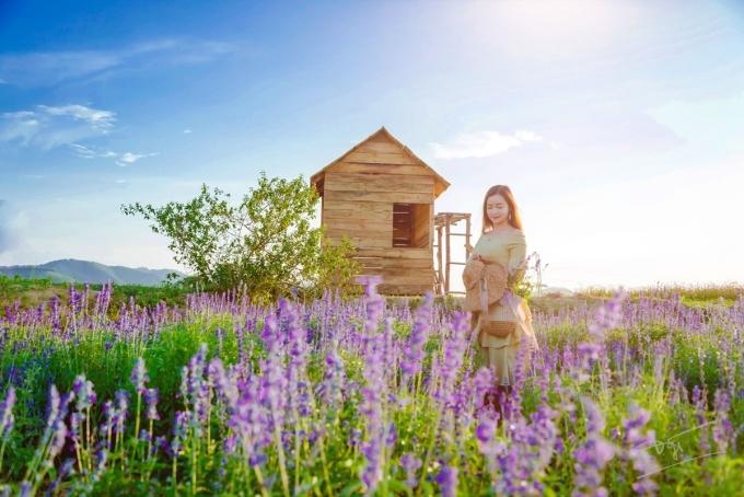 Chủ nông trại Nguyễn Ngọc Sáng tốt nghiệp ngành công nghệ thông tin nhưng yêu hoa, nặng lòng với cỏ cây, quyết định nhập những giống hoa đẹp nhất về chăm sóc. Anh cho biết mừng vui khi nhiều người dân bản địa lẫn du khách tìm đến, check-in và chụp ảnh cùng nữ hoàng xanh.