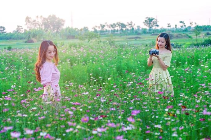 Green life farm còn thu hút người trẻ bởi cánh đồng hoa sao nhái nhiều màu. Hương hoa có mùi thơm nhẹ,thanh lọc không khí, loại bỏ chất độc hại và tạo cảm giác thư giản.