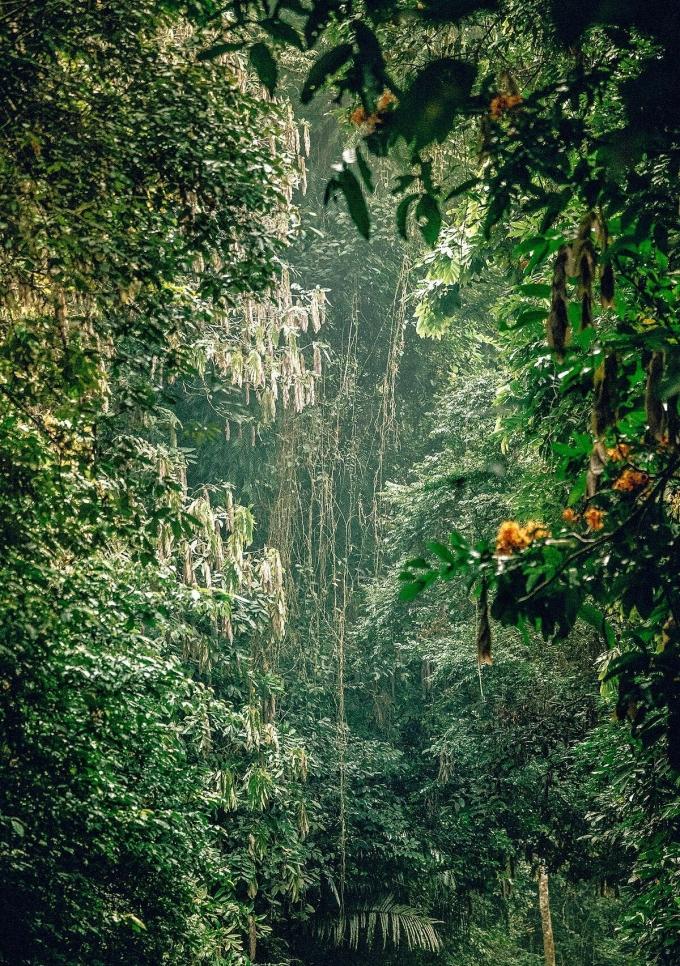 Cúc Phương là vườn quốc gia đầu tiên của Việt Nam, nằm ở phía nam của Hà Nội. Thành lập năm 1962, rừng Cúc Phương được bảo tồn nguyên vẹn, có nhiều loại động, thực vật quý hiếm. Rừng là vàng. Nếu chúng ta biết cách bảo tồn và quản lý nó tốt, nó sẽ rất có giá trị, Stephen Nash viết.