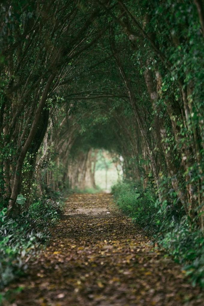 Trong thời gian ở Việt Nam, Stephen Nash còn đến thăm vườn quốc gia Tam Đảo. Đường vào rừng khá khó đi song khung cảnh vô cùng hoang sơ, yên tĩnh, quanh năm mây mù bao phủ sẽ hấp dẫn những người yêu thích khám phá.