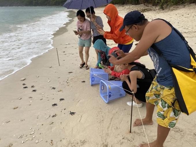 Khách du lịch được hướng dẫn thả rùa con về biển. Ảnh: Patrick Scott.