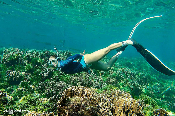 Dịch vụ lặn ngắm san hô ở đảo Phú Quý mới phát triển, cho du khách quan sát xuống độ sâu khoảng 2 – 5m với ống thở và chân vịt. Ảnh:Tính Phú Quý.