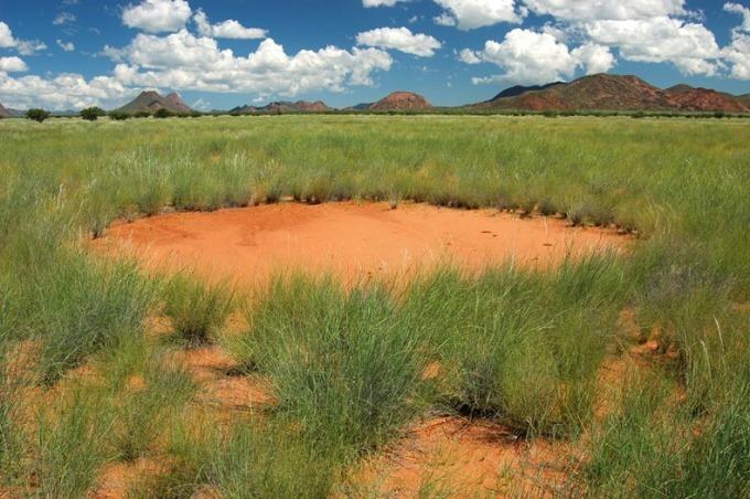 Bí ẩn về những Vòng tròn thần tiên trên đồng cỏ khô - 2