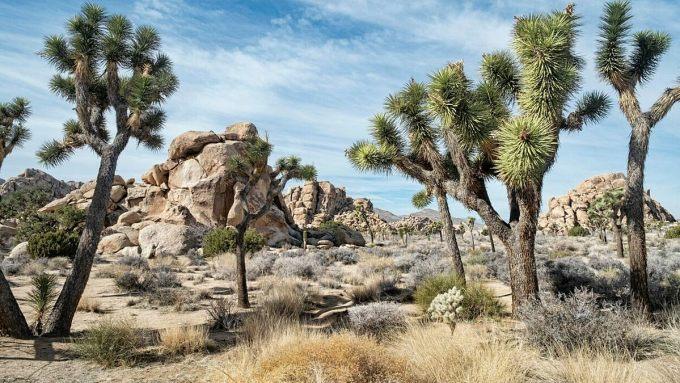 Vườn quốc gia Joshua Tree là một trong những điểm đến mà bạn sẽ ghé thăm nếu nhận được công việc trên. Ảnh: iStock