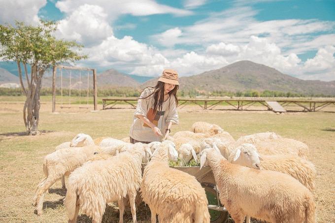 Đồng cừu Suối TiênẢnh: Phạm Hoài Thương