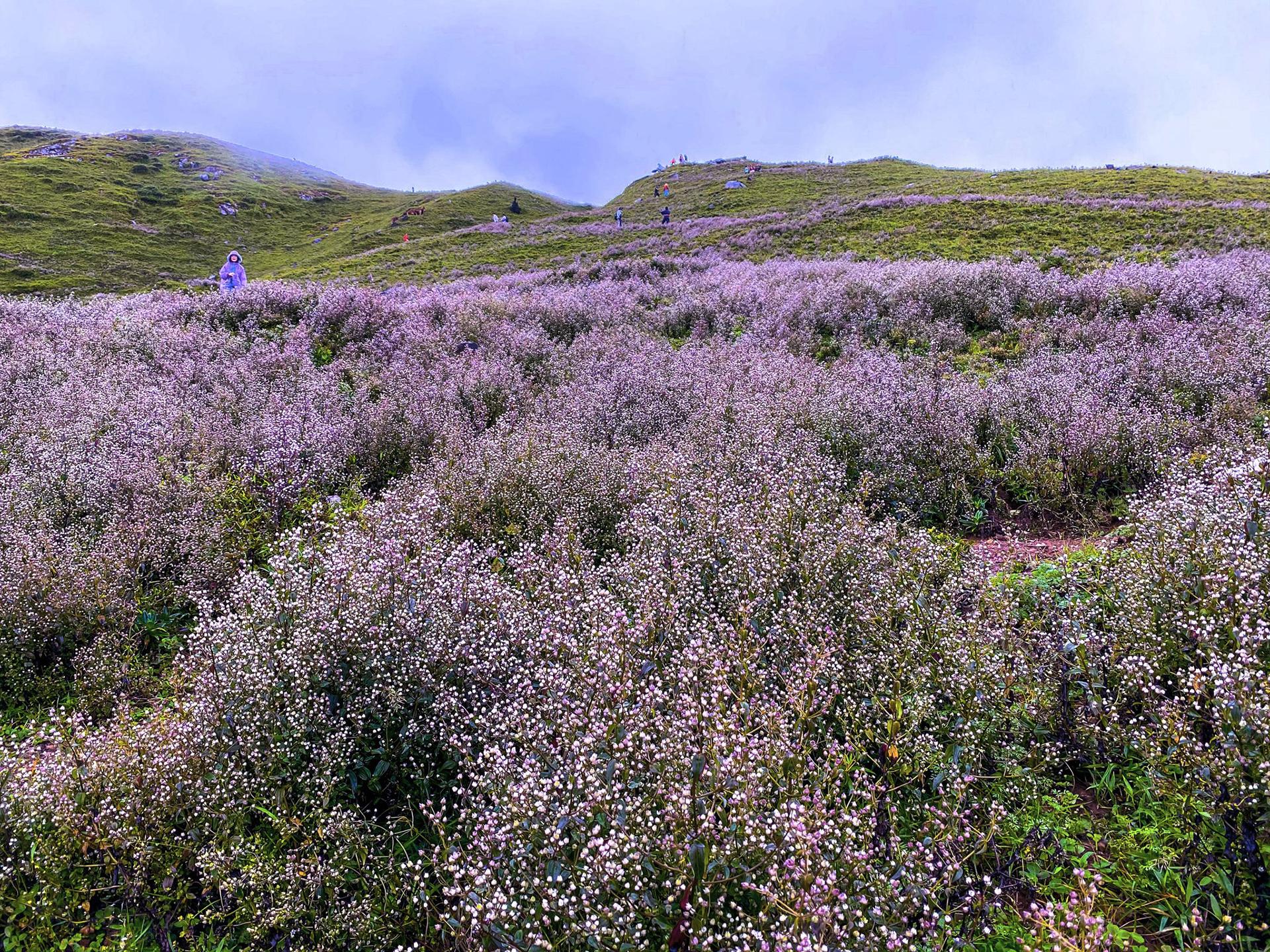 Chinh phục núi Tà Chì Nhù vào mùa hoa tím
