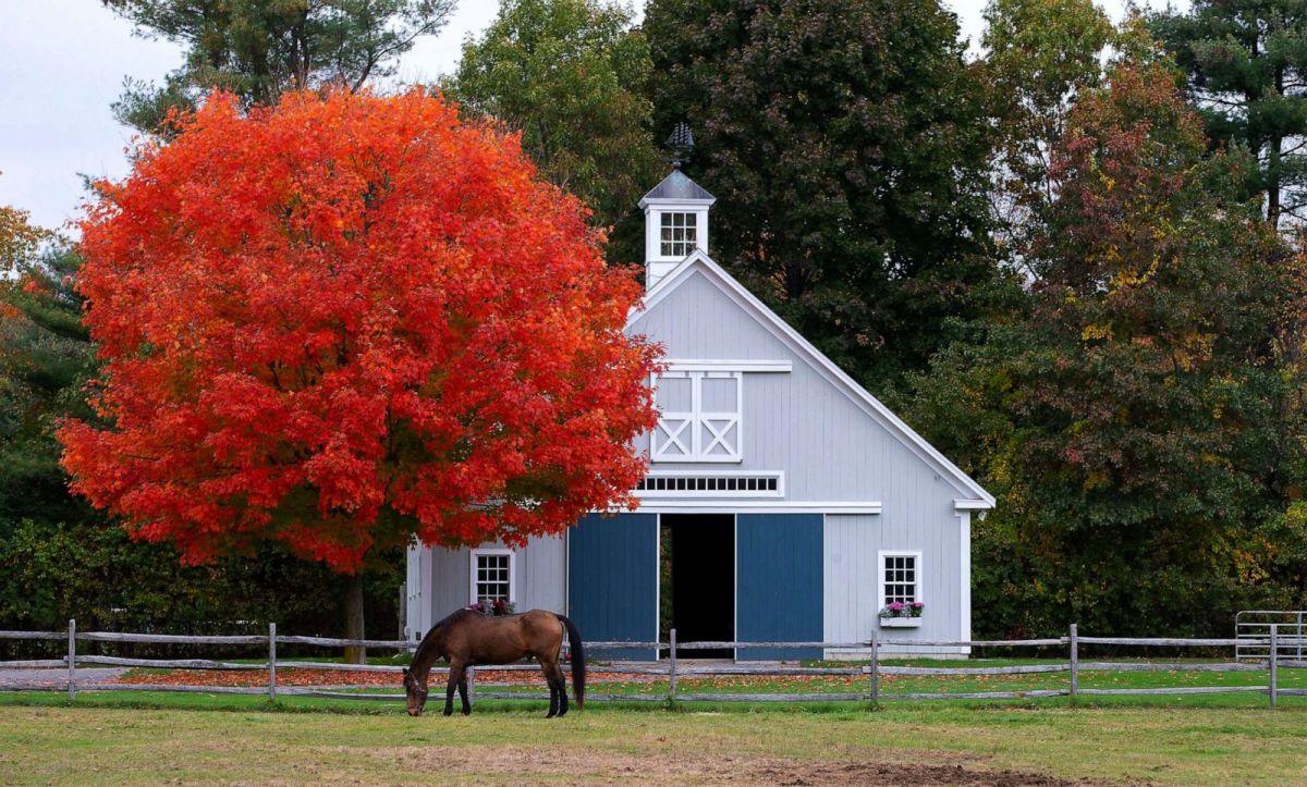 Mùa thu nhuộm màu khắp thế giới - Ảnh 10