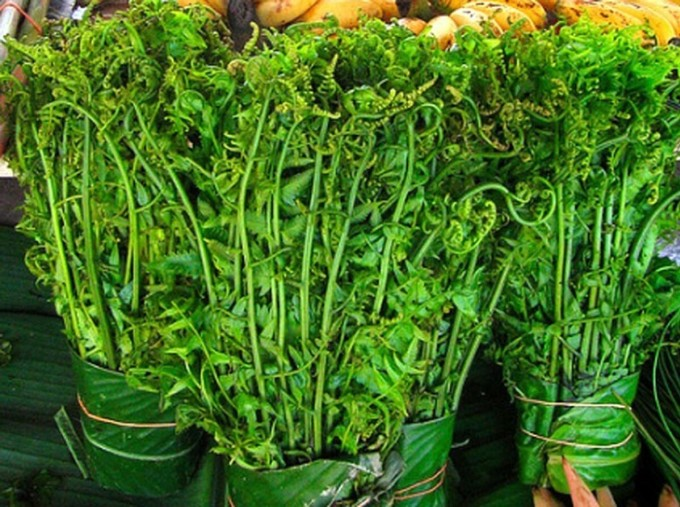 Rau dớn có tính mát nên món ăn được chế biến từ rau có thể hỗ trợ giải nhiệt. Ảnh: Luân Minh