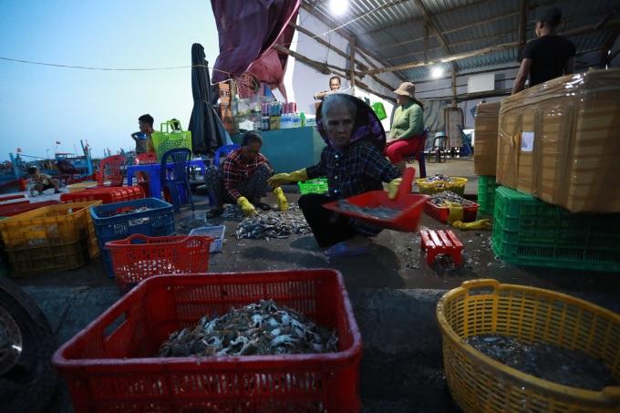 Ngoài ra du khách còn có thể  mua hải sản tươi sống trực tiếp tại cảng cá Bình Châu, thoải mái thương lượng giá cả với ngư dân thay vì ra chợ.