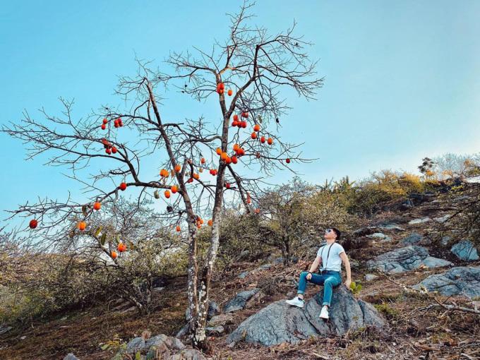 Các cây hồng cô đơn trở thành điểm check-in thu hút các bạn trẻ. Ảnh: thanhnagi/Instagram