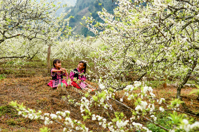 Tháng Hai là mùa hoa mận, hoa đào bung nở trên các núi đồi Đông - Tây Bắc