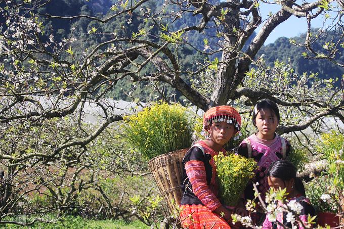 Trẻ em Mông dưới những tán mận ở thung lũng Nà Ka. Ảnh: Trần Thu Hiền