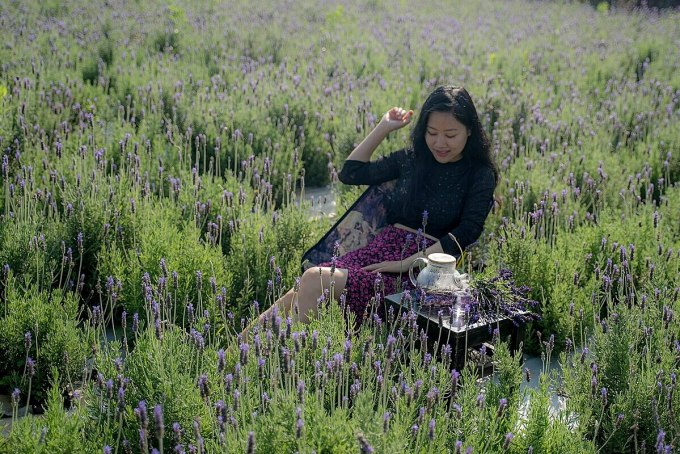 Lavender Garden Van Thanh Village is a new check-in point for visitors.  Photo: Nguyen Van Sang
