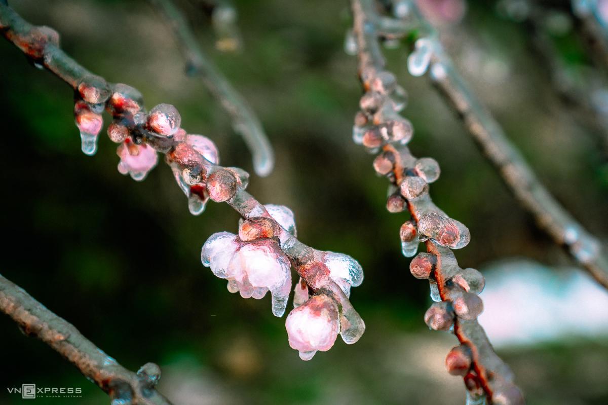 Sắc hoa xuân vùng cao - 6