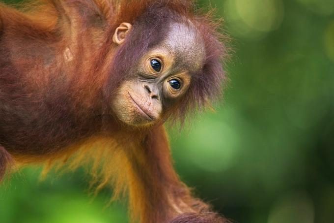 Khoảng 55% diện tích Sabah là rừng và các khu bảo tồn như lưu vực Maliau, Khu bảo tồn Thung lũng Danum. Nơi đây thu hút du khách với vẻ đẹp của hòn đảo Borneo, động vật hoang dã và nền văn hóa của 30 nhóm dân tộc. Ảnh: Anup Shah.