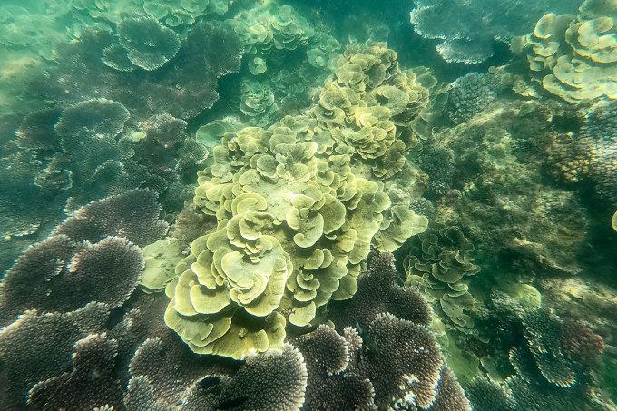 Một rạn san hô trong tour chị Tú đưa khách ra bãi hoang. Ảnh: Nguyễn Đông.