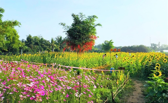 The 4,000 m2 flower garden is blooming.  Photo: NVCC.