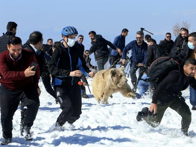 Khách đến xem hoảng sợ bỏ chạy khi Gấu nâu bất ngờ lao đến chỗ họ đang đứng. Ảnh: Ari Jalal/ Reuters