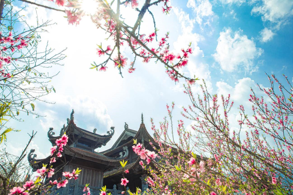 Muôn hoa anh đào khoe sắc giữa Sun World Fansipan Legend