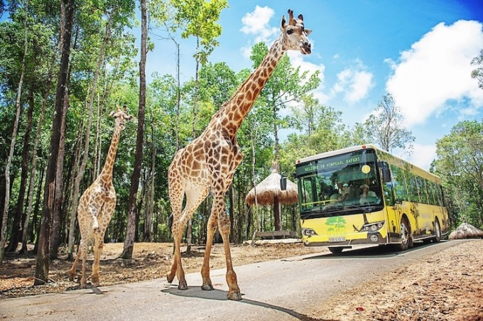 The largest semi-wildlife conservation park in Asia, Vinpearl Safari