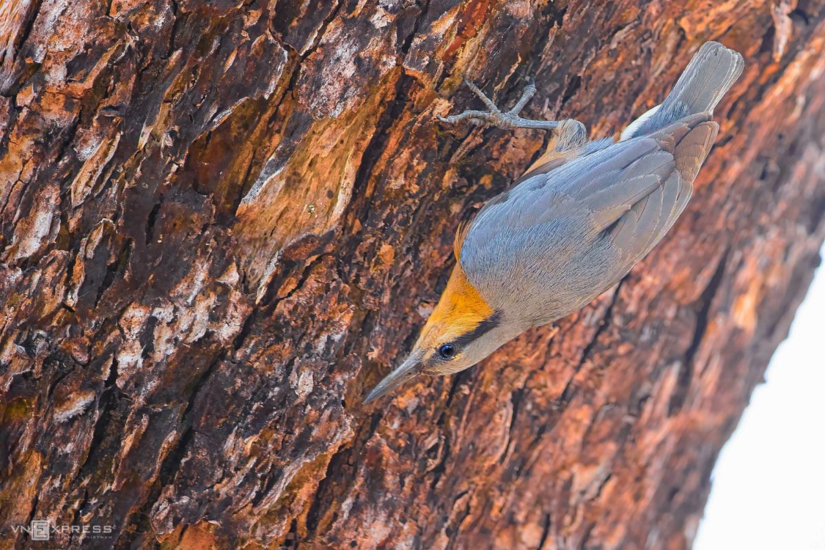 Vào rừng khộp săn ảnh chim - Ảnh 6