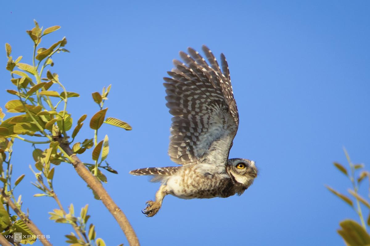 Vào rừng khộp săn ảnh chim - Ảnh 4