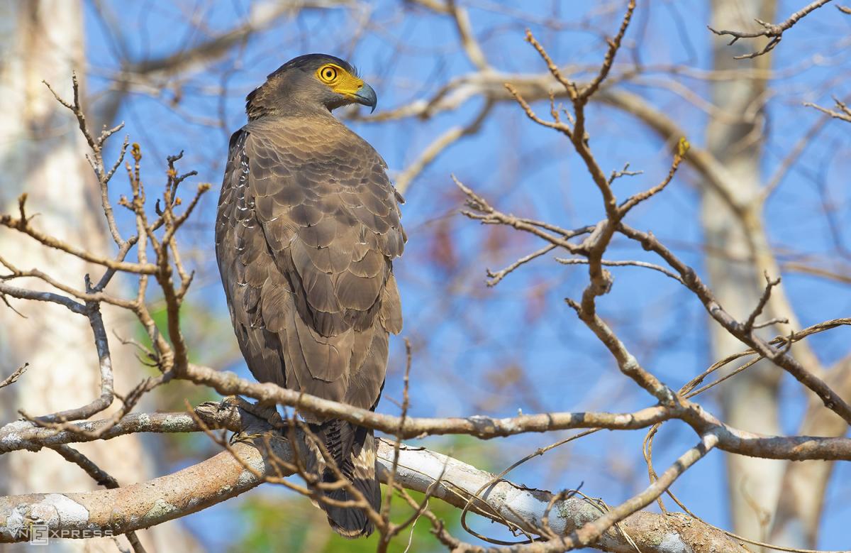 Vào rừng khộp săn ảnh chim - Ảnh 3