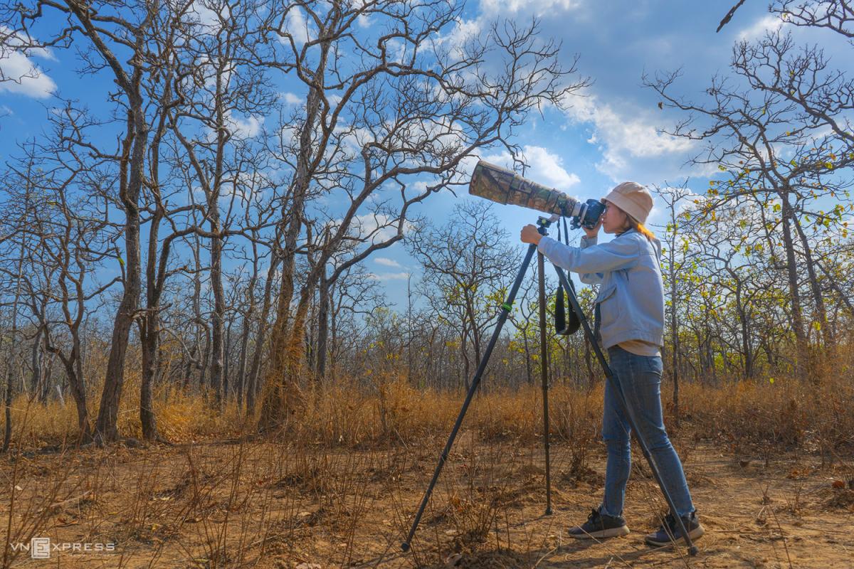 Vào rừng khộp săn ảnh chim - Ảnh 1