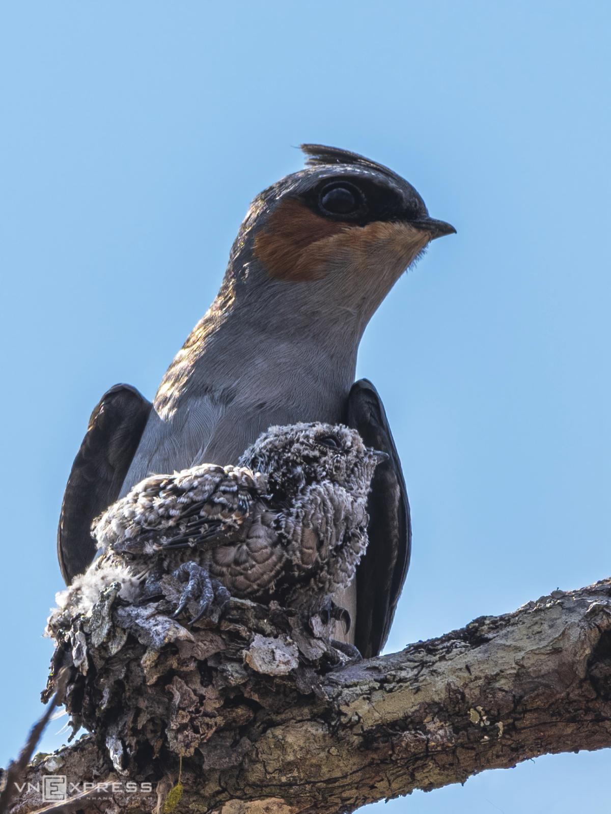 Vào rừng khộp săn ảnh chim - Ảnh 2