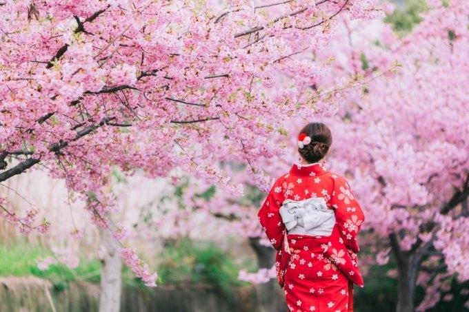 Vào mùa xuân, công viên Yoyogi nổi tiếng của Tokyo và sông Meguro trở nên sống động và đẹp hơn bao giờ hết nhờ những bông hoa anh đào nở. Bạn cũng có thể ngắm những bông hoa này tại nghĩa trang Yanaka, một nơi nổi tiếng không kém cho hoạt động này. Vòa tháng 4, du khách nên di chuyển lên phía bắc để thưởng thức quang cảnh ngoạn mục của Nhật Bản, với những bông hoa nở rộ trên đỉnh núi Phú Sĩ đẹp như tranh vẽ.